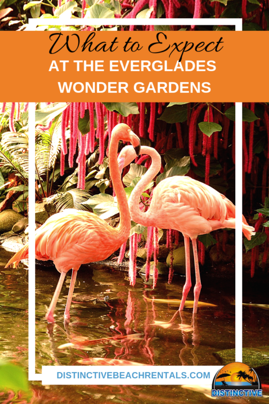 What to expect at the everglades wonder gardens