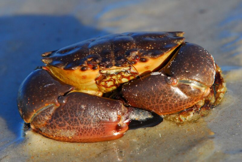 Florida is well-known for its world-class seafood. What many don't know is that it is the only state that offers Stone Crab dishes to enjoy on your vacation.
