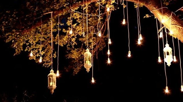 lights hanging from a tree