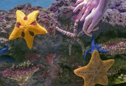 starfish touch tank